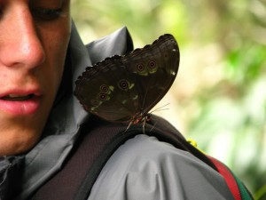 butterfly on your shoulder